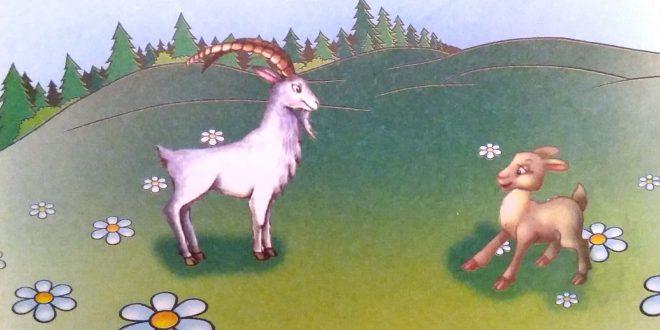 keçi balası